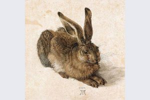 Albrecht Dürer, La lepre, 1502